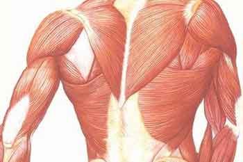 Duchenne-Muscular-Dystrophy